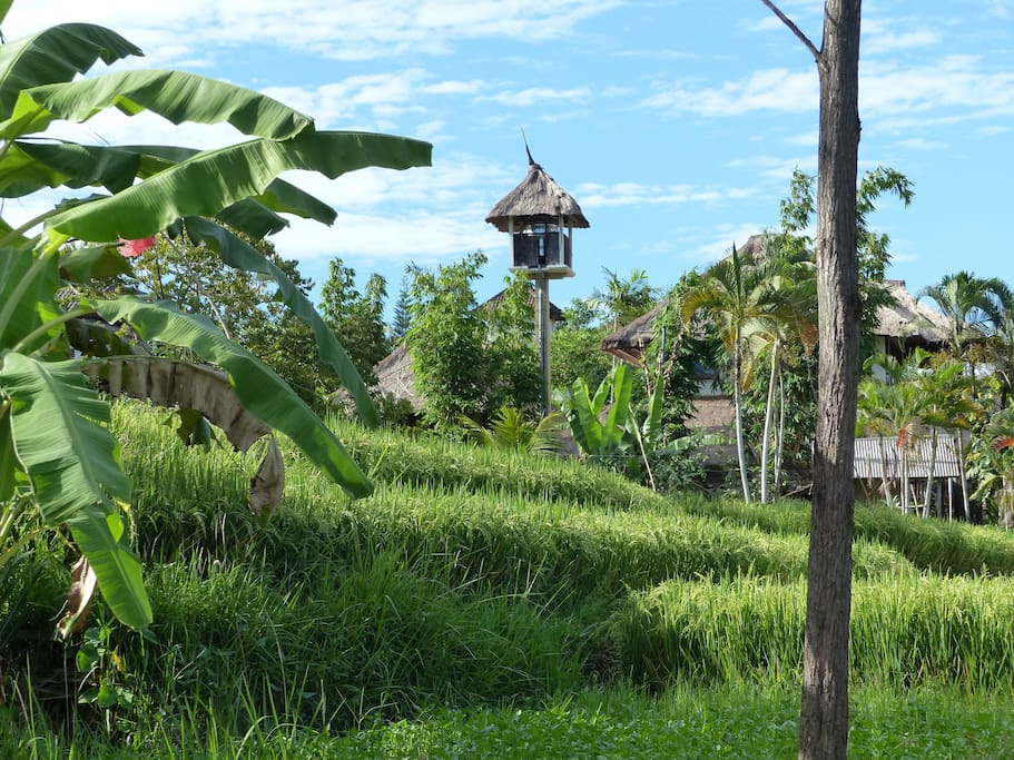 Ricefield Views - Look out for our water tower