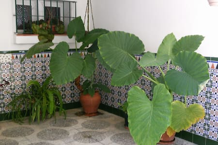 Alojamiento con muchas facilidades - San Roque - Bed & Breakfast