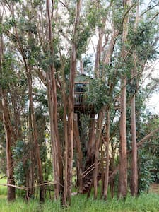 Tree House Swallowtail Magic Grove - Petaluma - Baumhaus