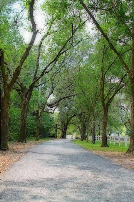 Tree Canopied Driveway