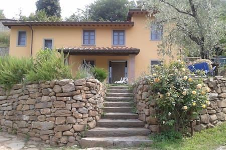 Luxury Farmhouse with swimming pool - Pescia - Villa