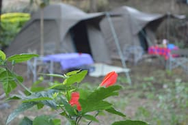 Picture of Tent in a beautiful and calm garden