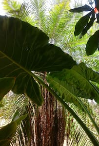 ecologe amadeus