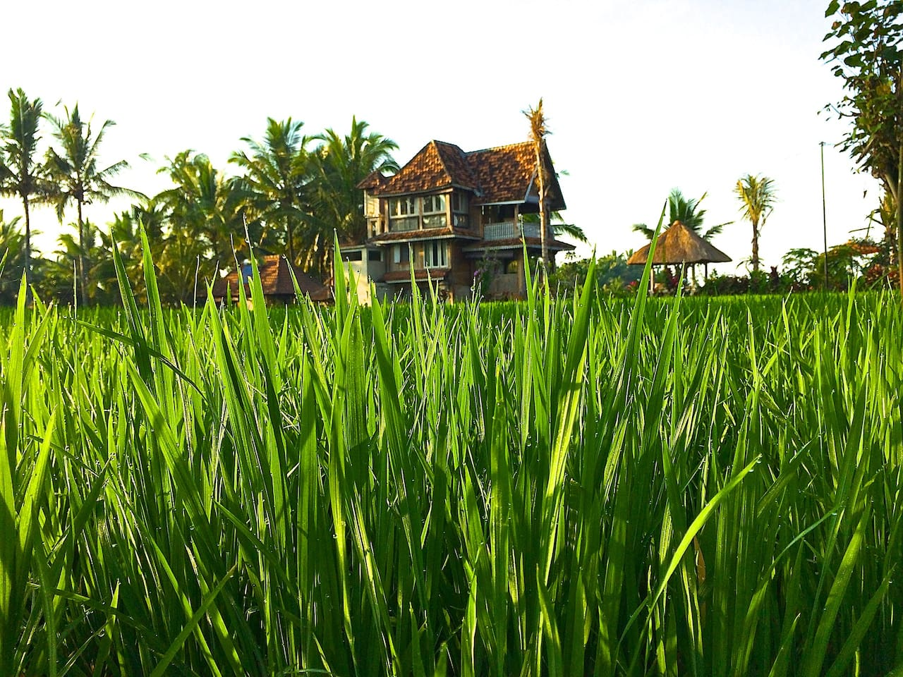 The Rice Joglo stands amongst the beautiful rice fields of Ubud