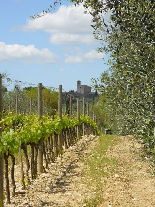 Our vineyards and the Abbey of Pontignano in the background