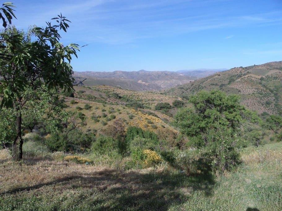 Vista desde el cortijo / views from the cortijo