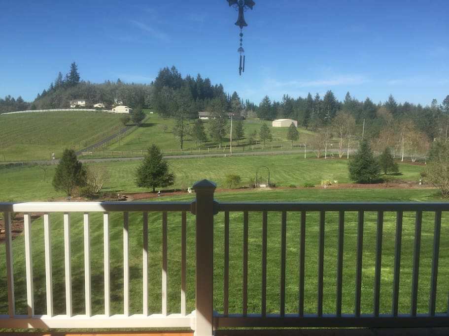 View from the front porch to a gorgeous vineyard just across the street.