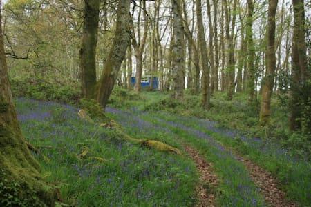 Beautiful Bluebell Wagon & Hot tub - Carmarthenshire