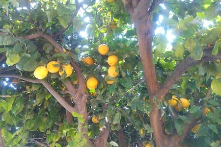 The Lemon Tree:Feel Cyprus - Limassol