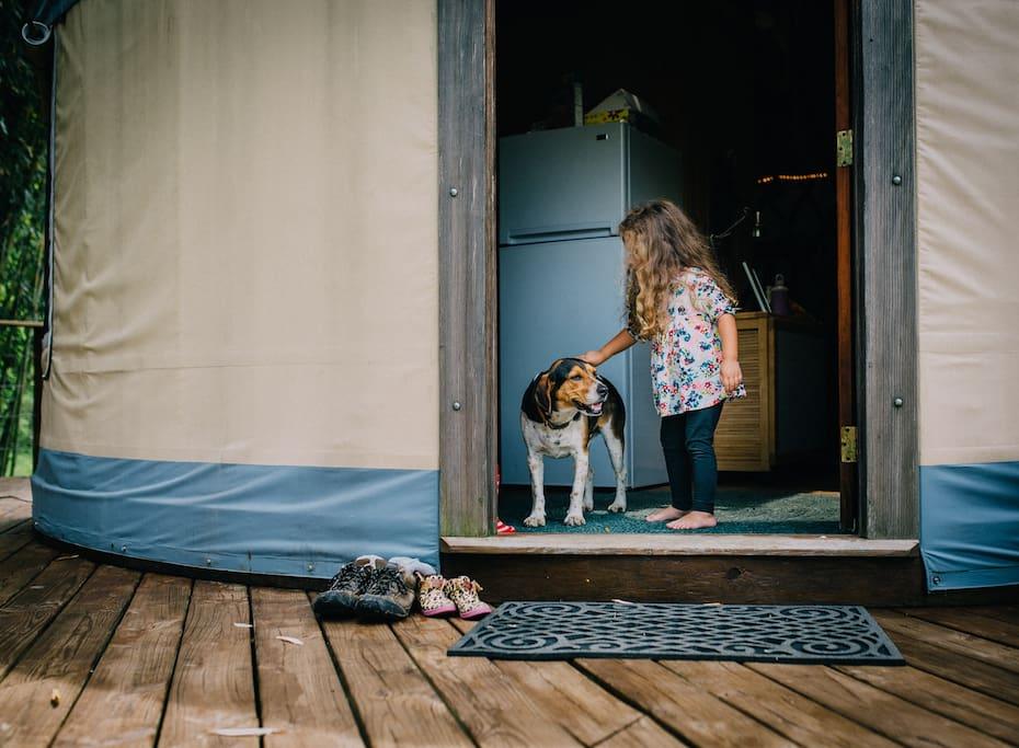 Beagler visits a guest (credit: Karmathartic Studios, Jacksonville, FL)