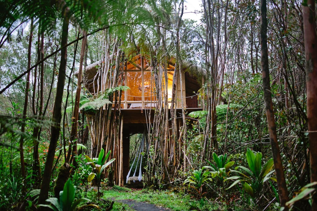 Dreamy tropical tree house treehouses for rent in fern for Airbnb casa sull albero
