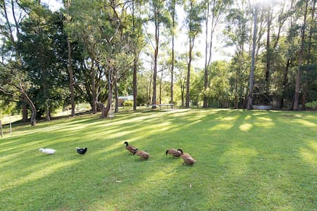 Green Duck Cottage Near Bangalow - Bangalow  - Chatka