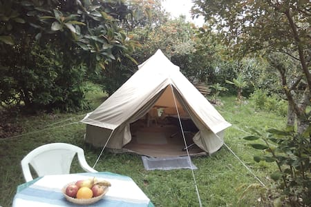 Camping in our subtropical garden