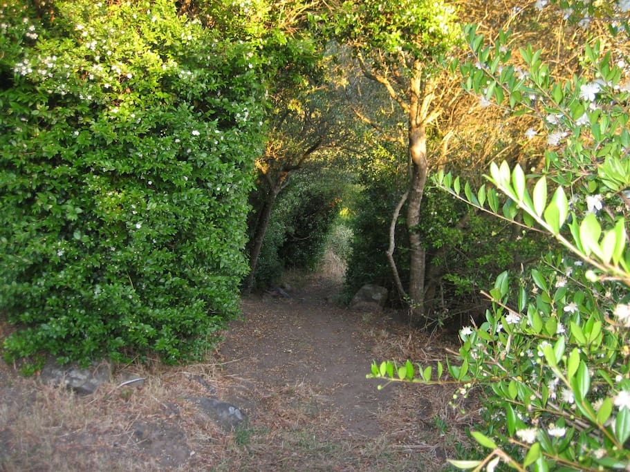 THE TUNNEL DOWN TO PARADISE