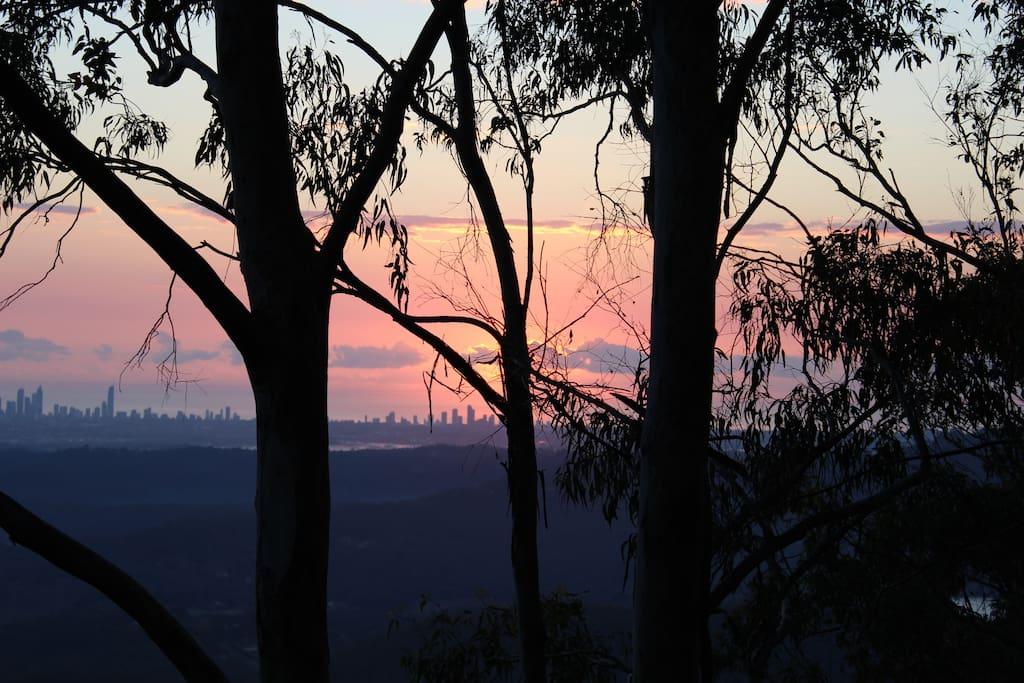 Sunrise through gum trees.