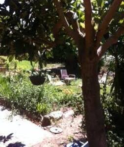 appartement en rez de jardin - Castellare-Di-Casinca