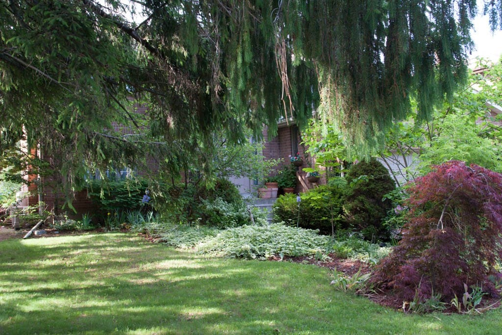 Front perennial gardens under the tall pines
