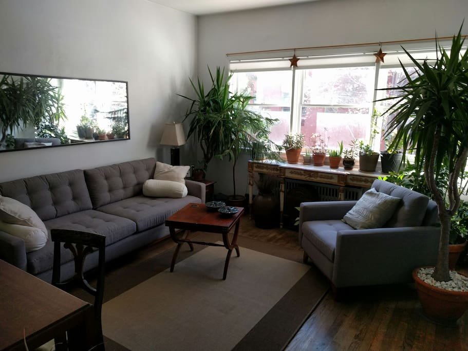 Cozy living room that turns into a greenhouse when the summer plants move in for the winter.