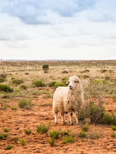Sheep Wagon Glamping on Navajoland - Page - Otros
