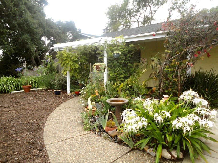Lots of plants and mulched front yard to save on water.