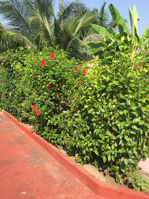 A view of the garden / Vue du jardin