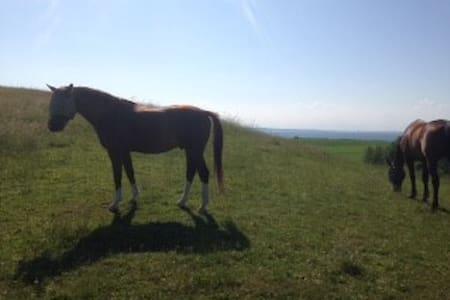 Værelse på hesteejendom - tag din hest m. på ferie - Bed & Breakfast