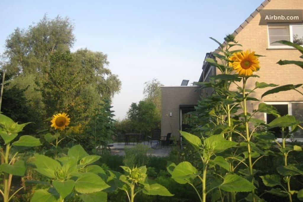 Unser Haus in der schönen Polderlandschaft von Zeeland