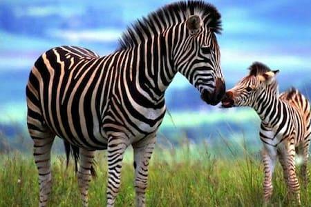 Zebra Chalet ℅FAKE TEST LISTING℅ - Kunyhó