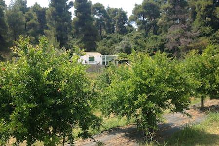 Organic farm 2.5 Km from the beach - House