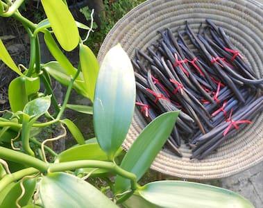 Vanilla on the Vine, Edge Hill, Cairns - Edge Hill