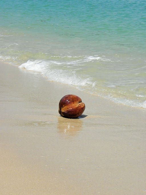 A coconut washing up on the shore.