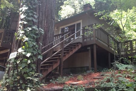 This modest home is nestled in a hillside neighborhood sprouting ferns in a redwood  forest!  The ideal weekend getaway to write, read or walk. Close to downtown Guerneville with it's world class restaurants. Many outstanding wineries are nearby.