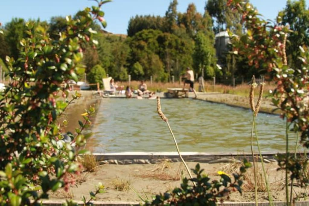 Our beautiful eco-pool...