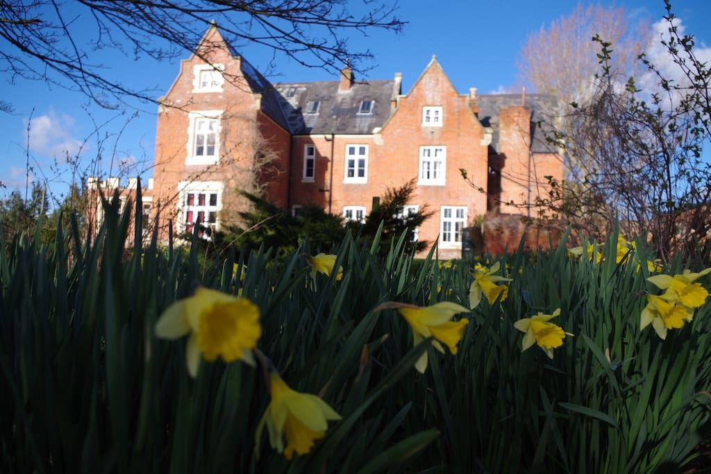 Spring Daffodils in the Gardens