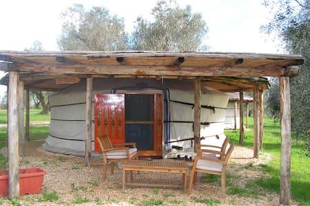 Relax in Yurta - Yurt