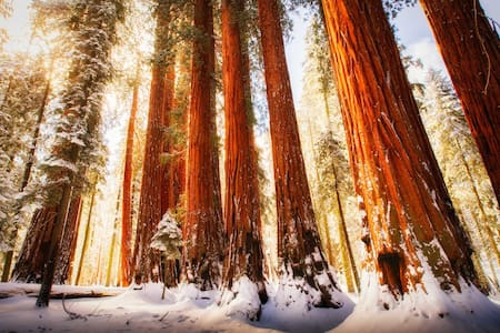 Sequoia Park Exclusive Guided Tours