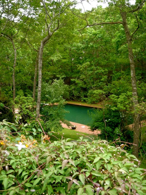 View From Veranda; Tranquility, Nature, Sun & Swim All Day