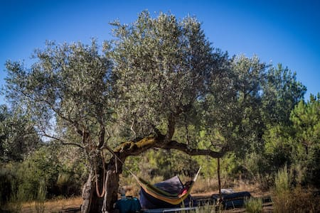 PEP Eco-camping (under the stars) - Other