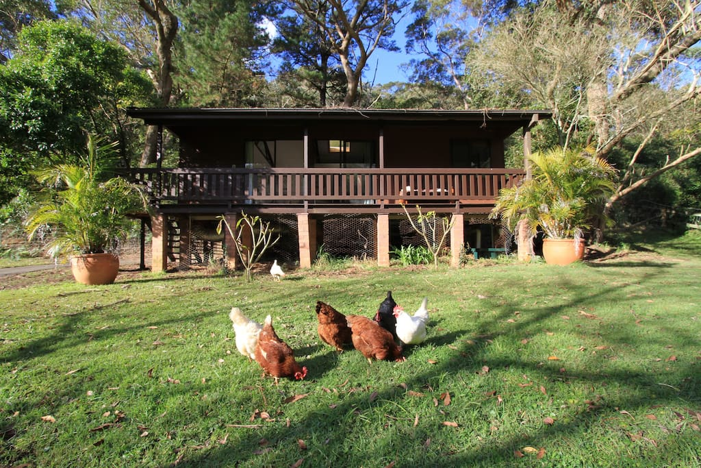Chooks in front of Kookaburra Cabin