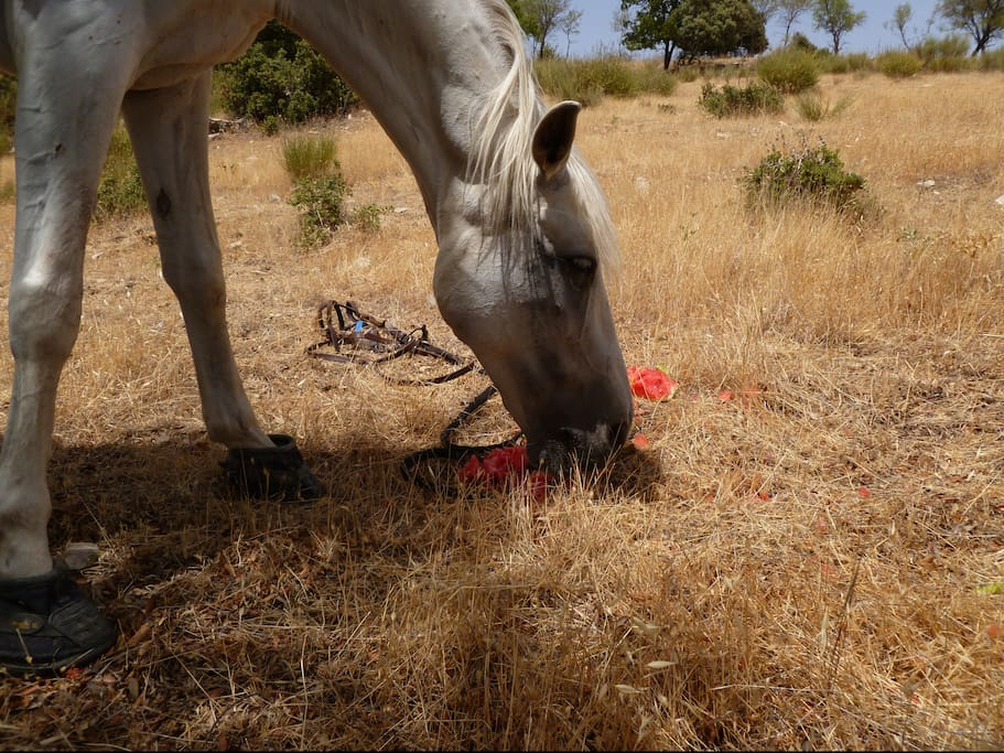 Horsey Holidays in Andalucia Spain!