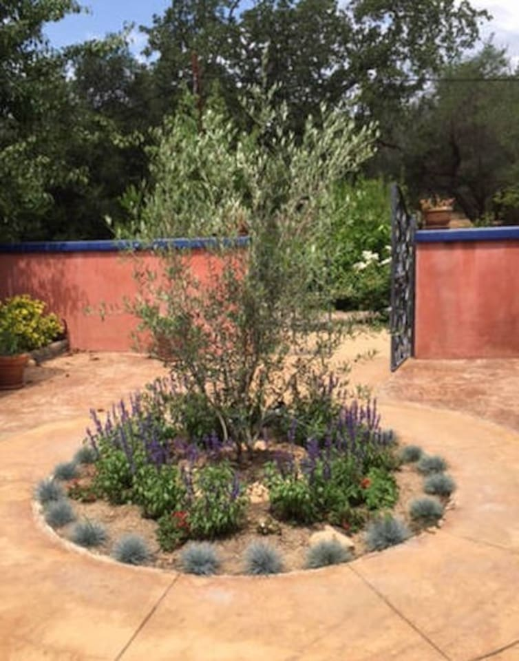 Fountain gone and olive tree flourishes