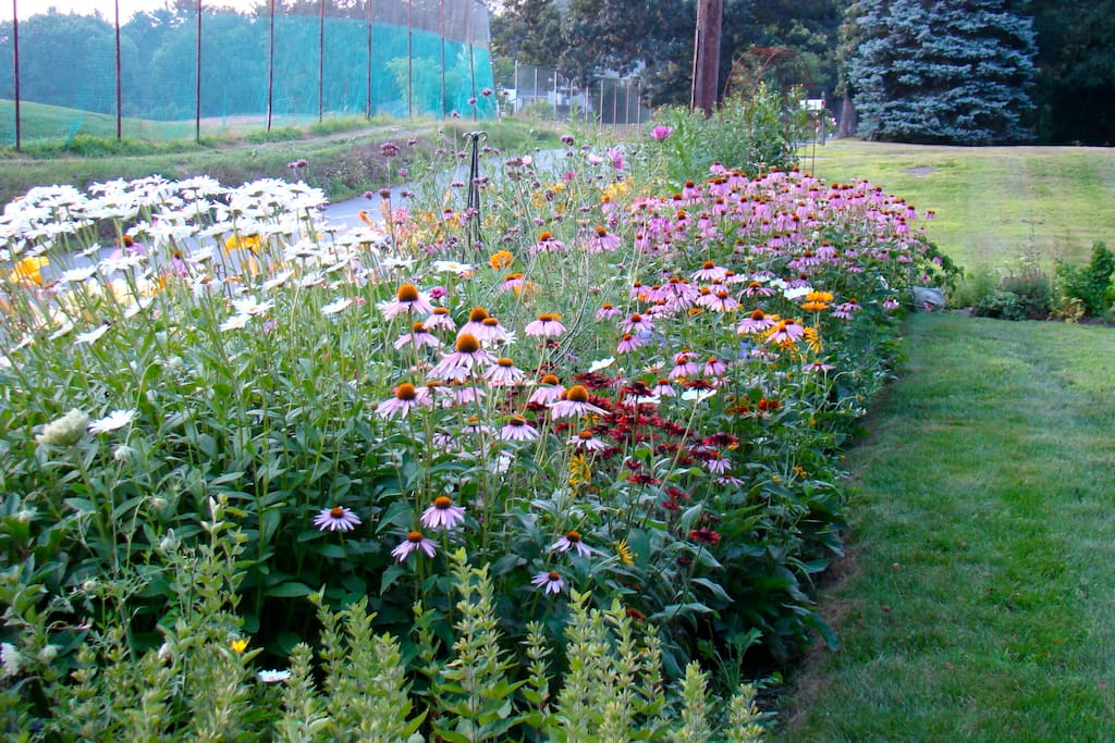 Perennial garden, fresh flowers in the house all year!