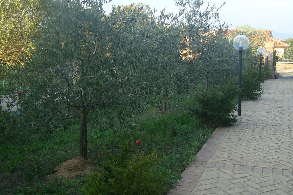Flat with garden by the lake