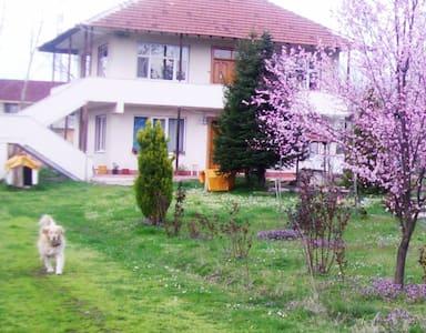 selma dinseven - House