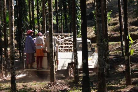 Kollur Mookambika -Plantation view room on terrace - Jadkal
