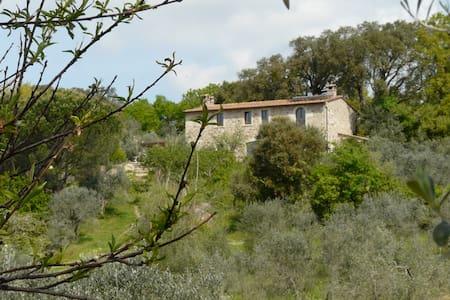 Ferien mitten im Olivenhain - Sassofortino