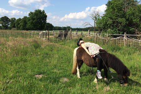 Felder, Wald und Pferde - Entspannung im Wendland! - Daire