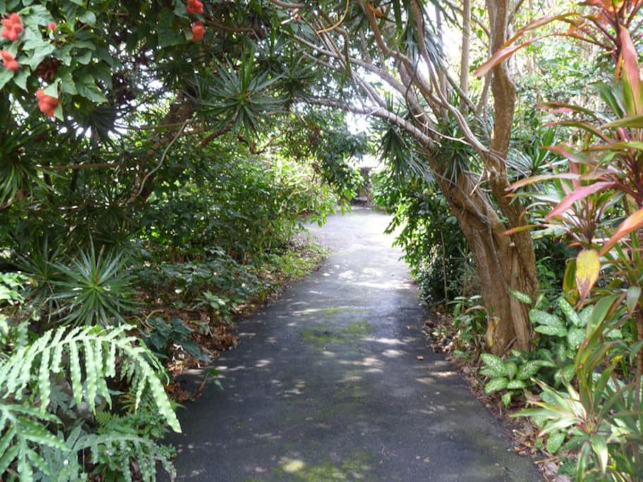 Driveway to the Coffee Mill Guesthouse