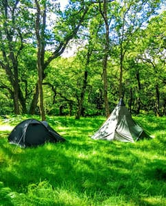 Dartmoor Wilderness Camping! - Newbridge