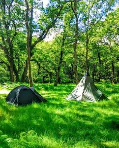 Dartmoor Wilderness Camping! - Appartement
